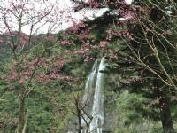 Taiwan Top Cherry Blossom Viewing Spots - Alishan, Nantou Sun Moon Lake & Taipei Chiang Kai-Shek Memorial Hall