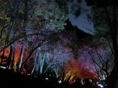 Evening event at Formosan Aboriginal Cultural Village Cherry Blossom Festival