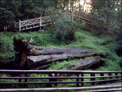 Sacred Tree Monument by Eva