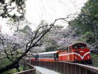 2016 Alishan Cherry Blossom Festival