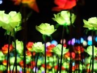 Cingjing Flower Celebration
