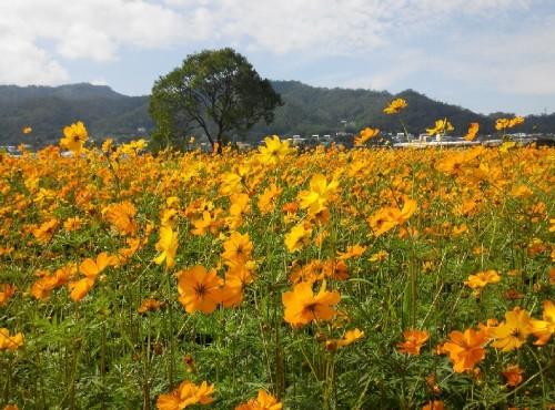 2018 Xinshe's Sea of Flower