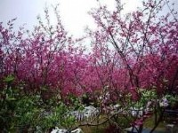 (Taiwan) Taiwan Flower Seasons