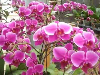 台灣蘭花聞名全球,更有「蘭花王國」之稱