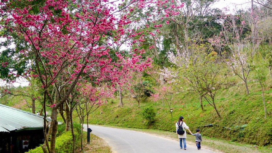 東勢林場有豐富的植物花卉、遊樂設施,是許多親子家庭的出遊選擇