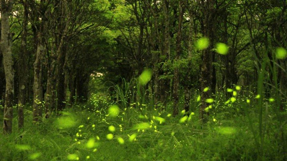 花莲大农大富森林园区是全国时间最早、面积最大、最容易到达的赏萤秘境