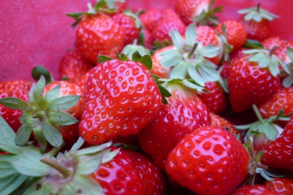 想立刻吃的話,可以選擇顏色較深紅的草莓
