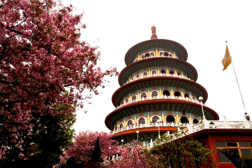 天元宮櫻花盛開