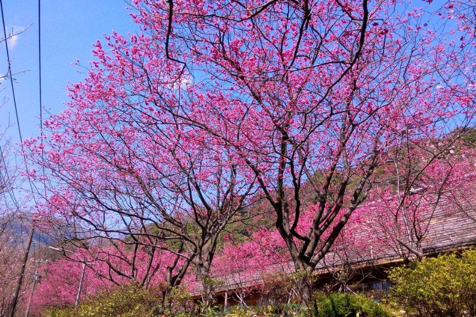 陽明山花季有著各式花卉滿園盛開