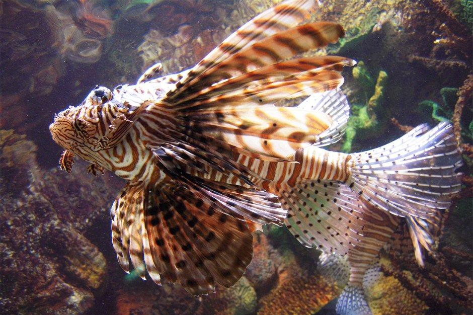 澎湖水族館擁有豐富的海洋生物與知識