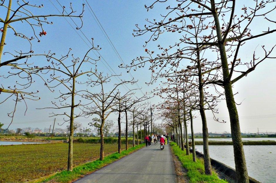 台南白河林初埤木棉花道是全球最美花海街道之一