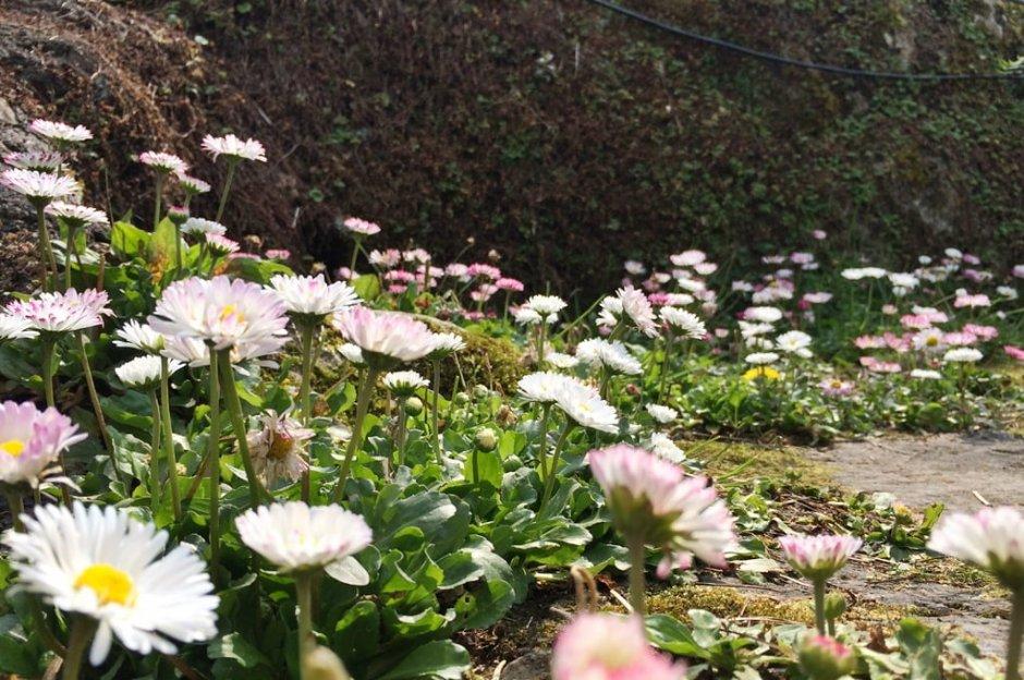 春天的阿里山繁花盛開