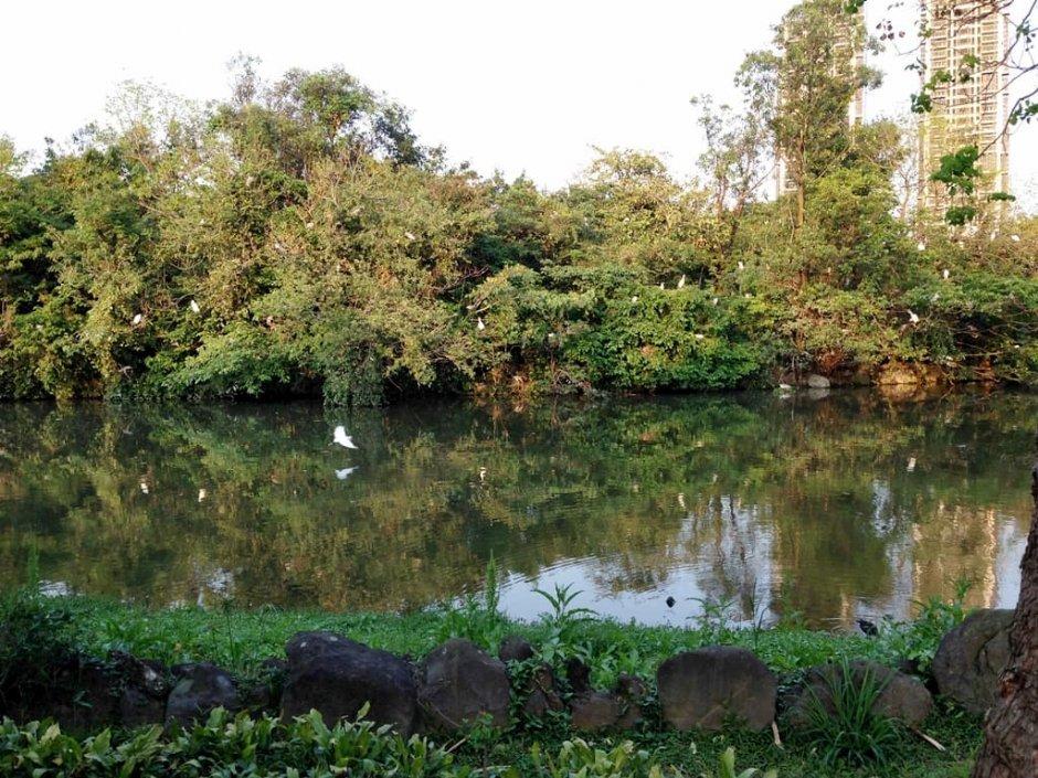 大安森林公園於近年復育螢火蟲有成,目前是市中心最佳賞螢勝地