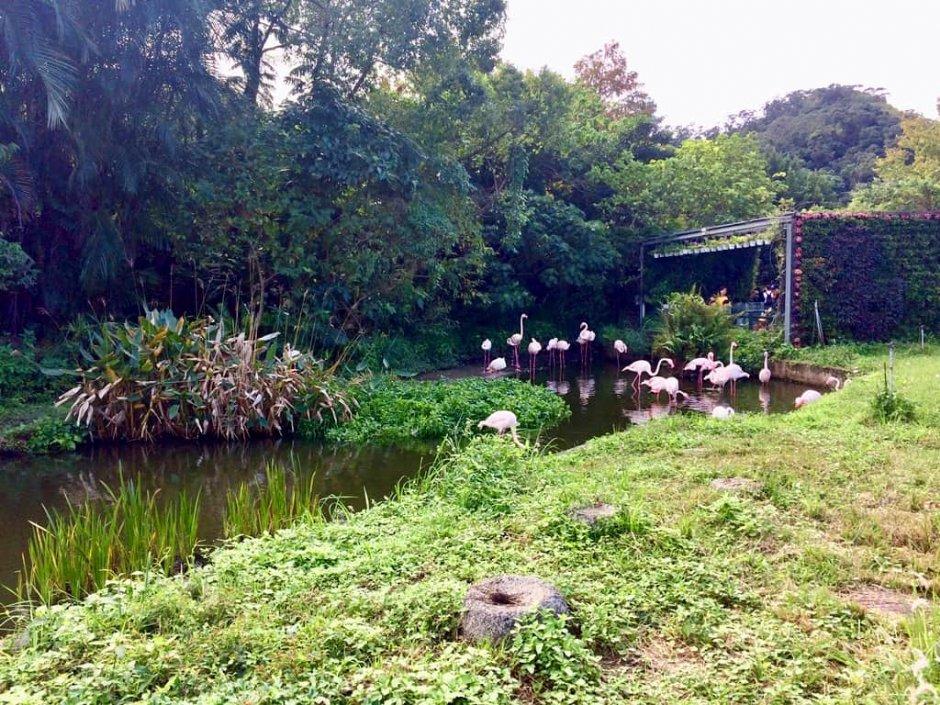 台北市立動物園入口廣場的「紅鶴」是最佳迎賓門面