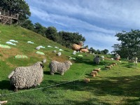 清境農場夏季年度盛事「清境一夏-風起飛羊」6月21日熱情登場
