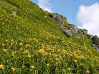 金針花季最佳賞花期 | 衝花東必訪!赤科山、六十石山、太麻里金黃花毯遍布