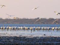 嬌客來臨!國際明星鳥「2020黑面琵鷺保育季」活動登場