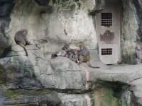 猴子<br/> 攝影:Eva隨手拍
