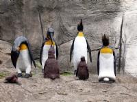 門口企鵝造型<br/> 攝影:amo