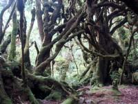 交錯糾結的樹根<br/> 攝影:余燕鳳