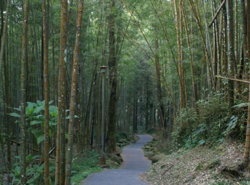 溪頭自然教育園區(溪頭森林遊樂區)-溪頭自然教育園區