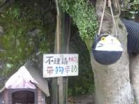 侯硐貓村<br/> 攝影:Yuling