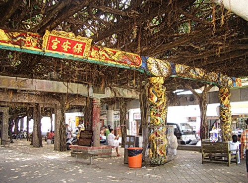 Tongliang Great Banyan