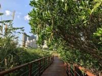 淡水河紅樹林自然保留區