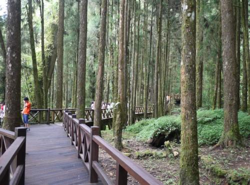 Alishan Forest Recreation Area-201407巨木群棧道