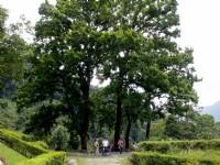 翁鬱樹林<br/> 攝影:amo