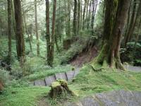 201407阿里山森林步道<br/> 攝影:三個井