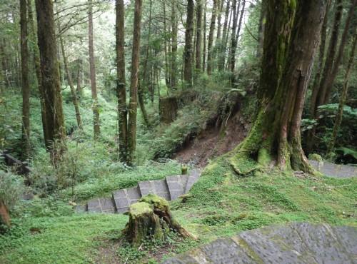 Alishan Forest Recreation Area-201407阿里山森林步道
