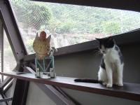 貓橋內的貓咪<br/> 攝影:Lu