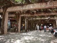Tongliang Great Banyan