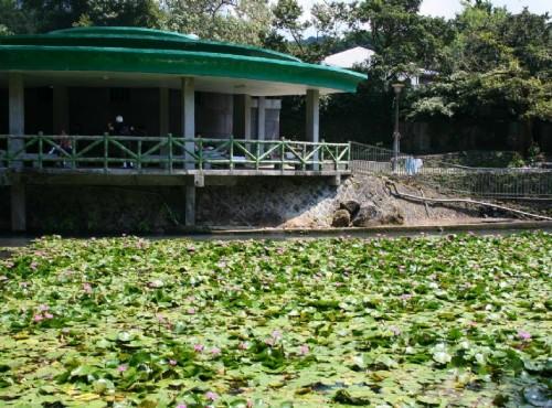 前山公园-莲花池