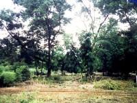 瑞竹竹类标本园