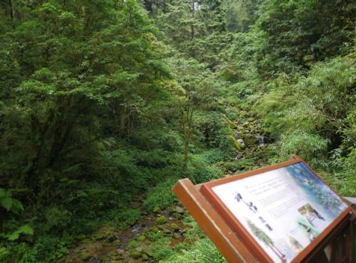 Alishan Forest Recreation Area-201407神怡流瀑