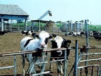 酪農專區<br/> 攝影:雲林縣政府
