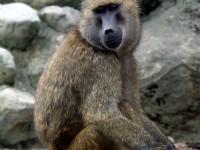 可愛猴子<br/> 攝影:amo