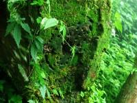 樹頭長滿綠葉<br/> 攝影:簡時強