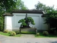 竹素園-盆景<br/> 攝影:余錫堅