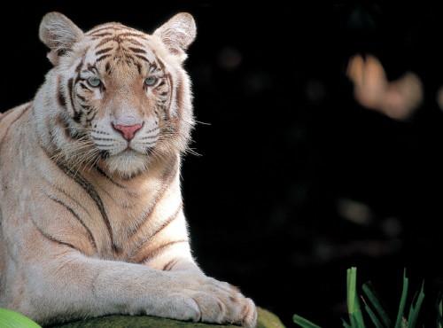 新加坡動物園-新加坡動物園