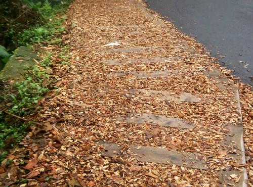 溪頭自然教育園區(溪頭森林遊樂區)-軟木屑步道