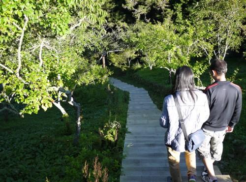 Alishan Forest Recreation Area-201407沼平公園櫻花林