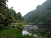 自然植物保留區<br/> 攝影:余燕鳳