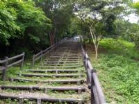 水碓觀景公園的原木階梯<br/> 攝影:kavin