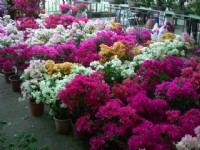 Jianguo Holiday Flower Market