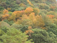 落葉樹森林景觀<br/> 攝影:老山羊部落格