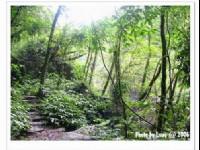 林相茂密的松羅溪畔1<br/> 攝影:跟著小野郎出走