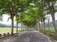 鹿野龙田自行车道